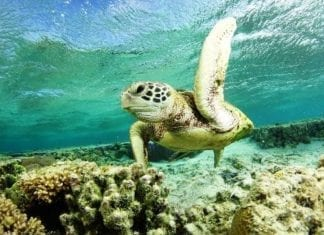 Great Barrier Reef Snorkeling Tours - 5 Things You Didn't Know About Sea Turtles