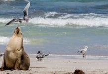 summer on kangaroo island
