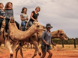 free camel ride in the red centre