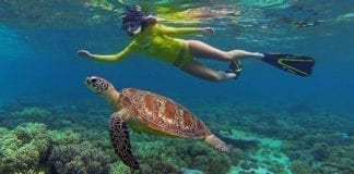 Ocean-SaOcean-Safari-turtle-girl-1fari-turtle-girl-1