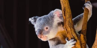 Tips on Relocating to Australia