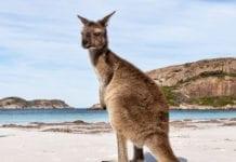 Kangaroo Island Tours From Adelaide Australia
