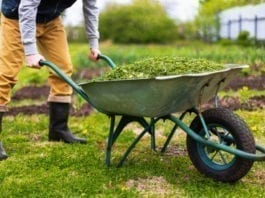 Farming Jobs in Victoria for Backpackers