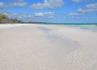 Fraser Island 4WD Tour from Noosa or Rainbow Beach