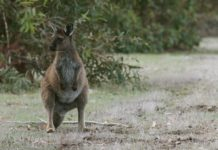 Kangaroo Island tours and Overnight Adventure