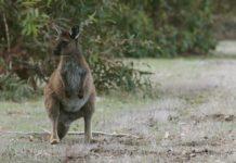 Book Adventure Tours in Australia