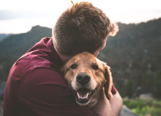 How Do Support Animals Provide Emotional Buffer
