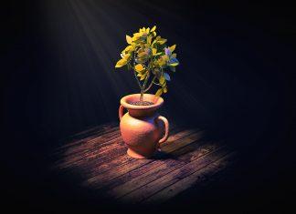 How Many Fluorescent Bulbs Do You Need to Grow Houseplants