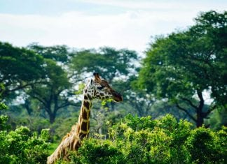 Bucket List of a Uganda Safari