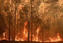 The Impact of NSW Bushfires on Natural Habitat