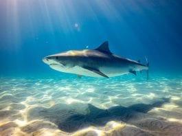 Backpacker Tours Australia Sharks