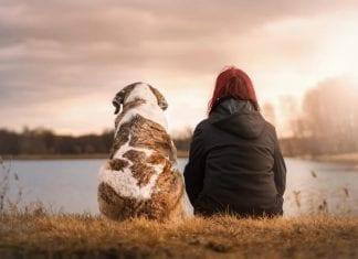 How to Improve Your Dog's Life
